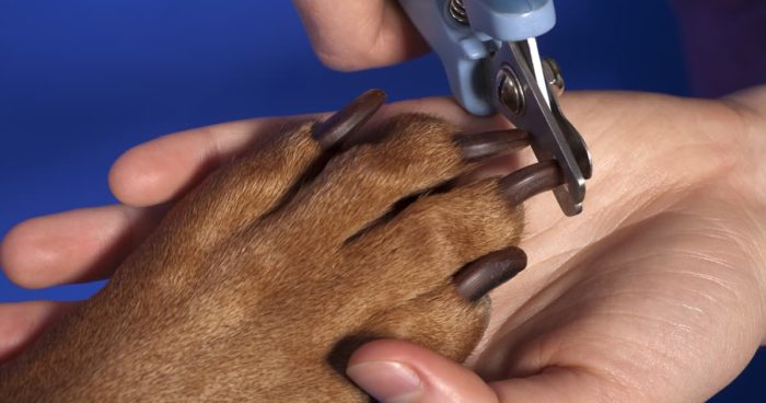 How to Cutt Your Animals Nails